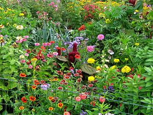Vielfalt im Bauerngarten